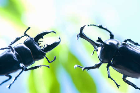 beetles: Beetles and stag Stock Photo