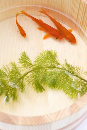 waterweed: Goldfish
