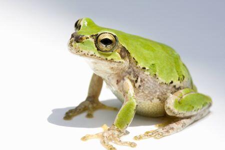 Frog Foto de archivo