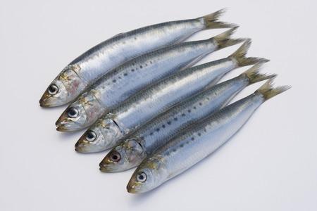 stuff fish: Sardines