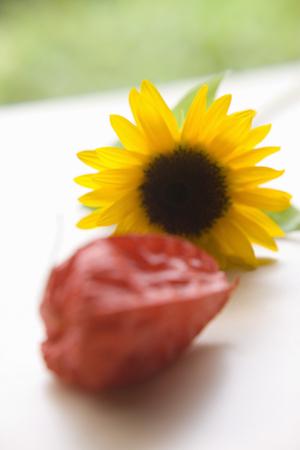 alkekengi: Summer flowers
