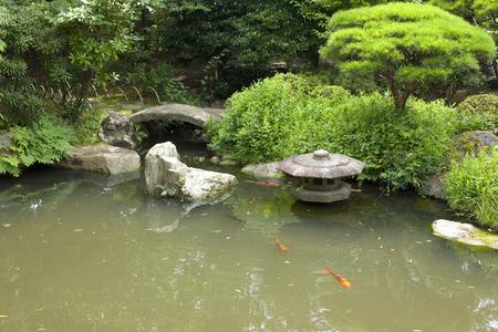 freshwater aquarium plants: Japan garden