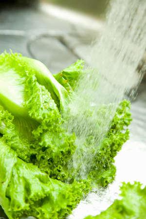 washable: Lettuce