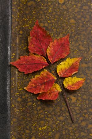 reading material: Leaf of Rhus chinensis