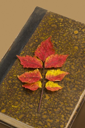 reading materials: Leaf of Rhus chinensis