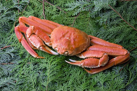 marine crustaceans: Snow crab Stock Photo