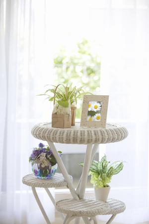 dwelling: Foliage plants