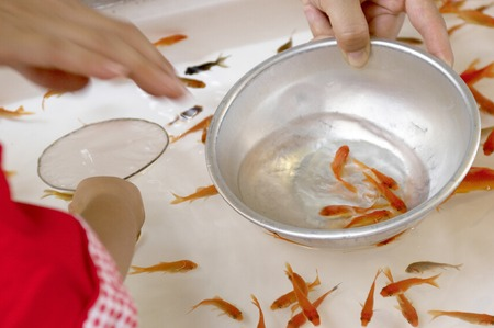 scooping: Scooping goldfish Stock Photo