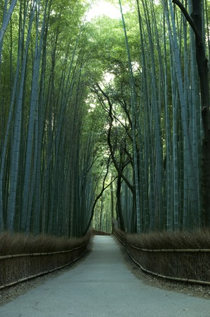 kyoto: Bamboo forest