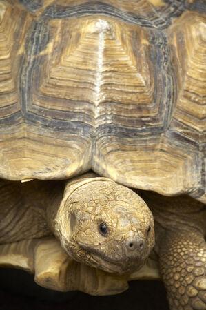 Turtle Stock Photo - 6210972