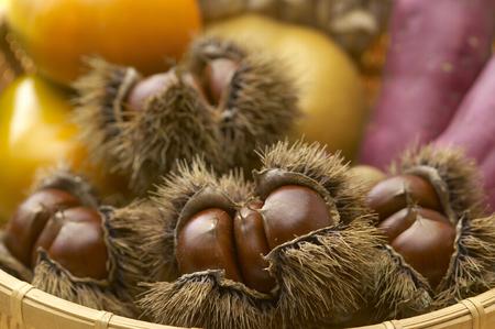 peal: Chestnut in its bur