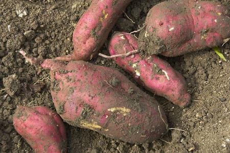 s��kartoffel: Sweet Kartoffel