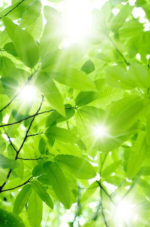 新鮮なグリーン