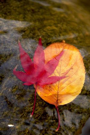 dead leaves: Hojas muertas