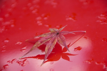 A fallen leaf of colored leaves on the red floor. 写真素材