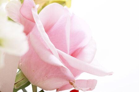 バラの花のショットを閉じる。