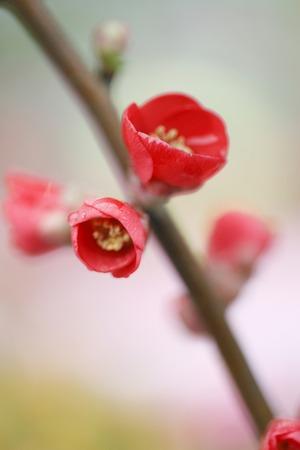 senile: Some Senile flower with the brunch.