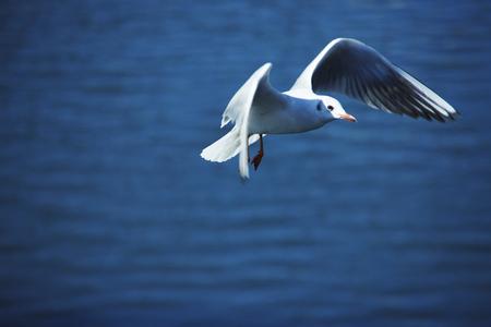 seawater: Sea Gull Stock Photo