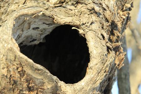 burrow: Burrow