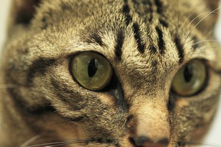 日本猫 写真素材 - 46232500
