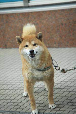 犬 写真素材 - 46232766