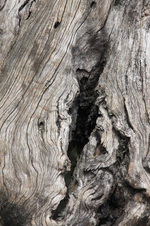 spunk: Old trees