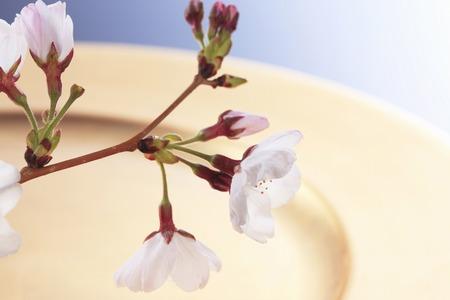 bon: Sakura and Bon