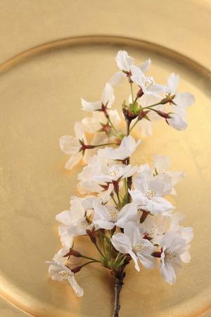 Cherry, Japanese-style image