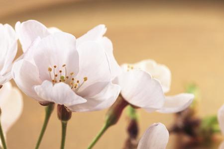 harmonize: Cherry, Japanese-style image