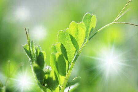 invigorating: Fresh green