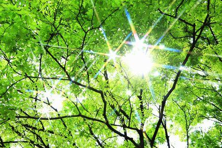 iluminados: Verde fresco