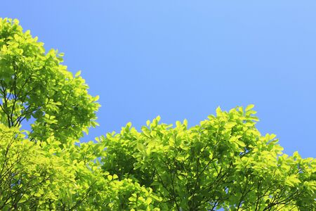 Fresh green leaves and blue sky