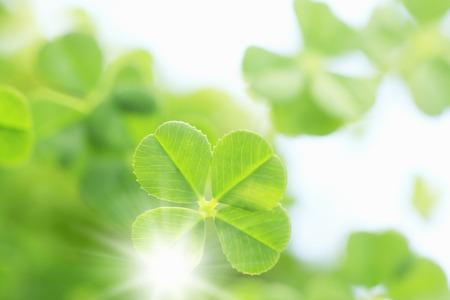 spring leaf: Clover leaf