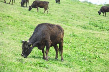 rancho: Ganader�a Foto de archivo