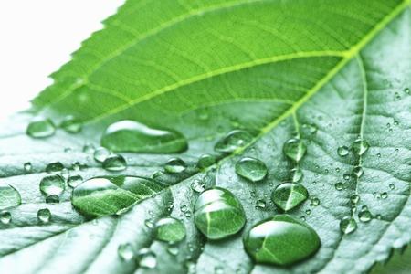 Bladeren met waterdruppels