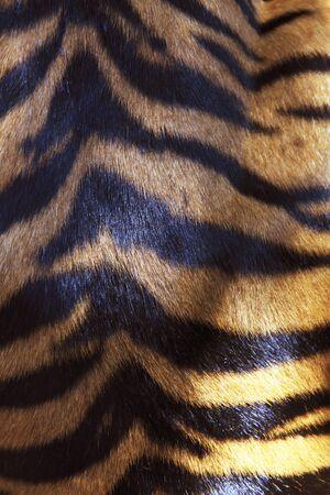 スマトラトラ