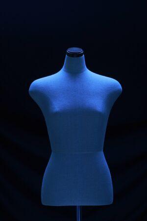 body dimensions: Torso
