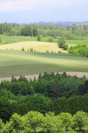 patchwork: Patchwork hills