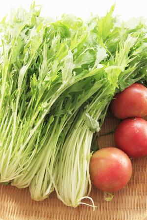 potherb: Tomatoes and mizuna Stock Photo