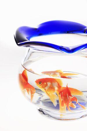 goldfish bowl: Goldfish Bowl