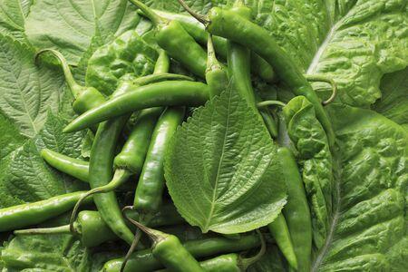 Lettuce leaf vegetables and sesame seeds and green pepper