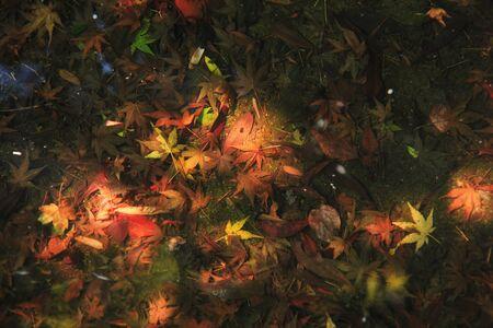 水の底に沈む秋の葉 写真素材