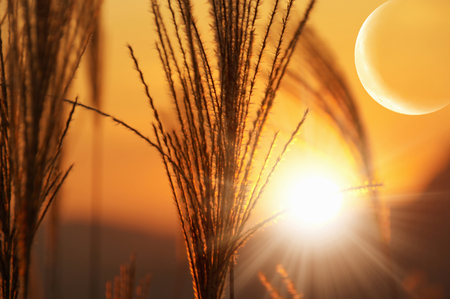 Moon and silver grass