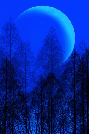 arbre mort: Lune et arbre mort