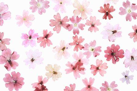 pressed: Pressed flowers floret Stock Photo