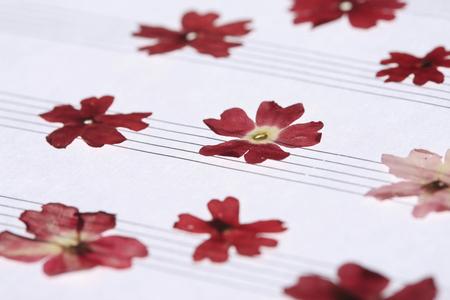 floret: Floret of the pressed flower staff paper
