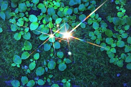 radiancy: Roxas image