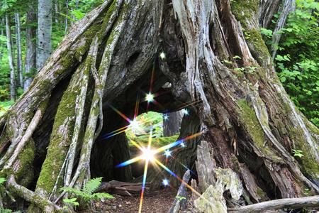 spunk: Primeval forest Stock Photo