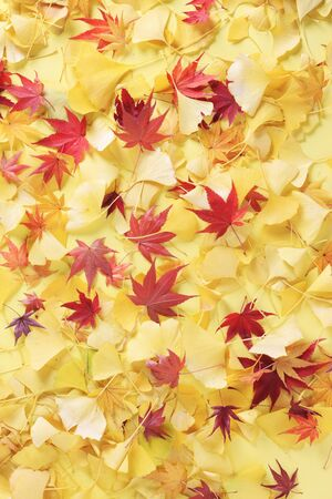 gingko: Gingko and maples
