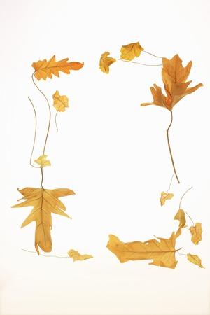 dode bladeren: Dode bladeren kader